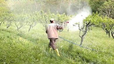 Tarım İlacı Zehirlenmesinde İlk Yardım